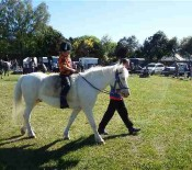 Horse Judging Pet Day 2015 2 opt