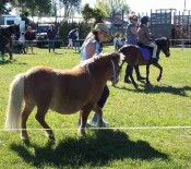 Horse Judging Pet Day 2015 4 opt