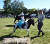 Horse Judging Pet Day 2015 opt