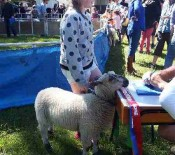 Pet Lambs on Pet Day 2015 3 opt