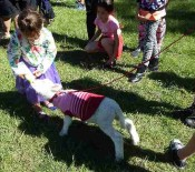 Pet Lambs on Pet Day 2015 4 opt