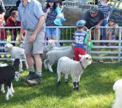 Pet Lambs on Pet Day 2015 5 opt