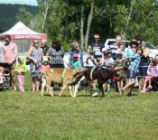 Pet Parade Pet Day 2015 15 opt