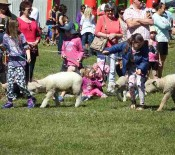 Pet Parade Pet Day 2015 2 opt