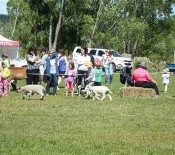 Pet Parade Pet Day 2015 3 opt