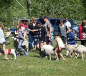 Pet Parade Pet Day 2015 8 opt