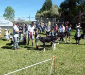 Pet calves Pet Day 2015 2 opt