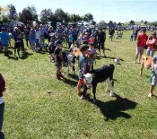 Pet calves Pet Day 2015 6 opt