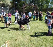 Pet calves Pet Day 2015 opt